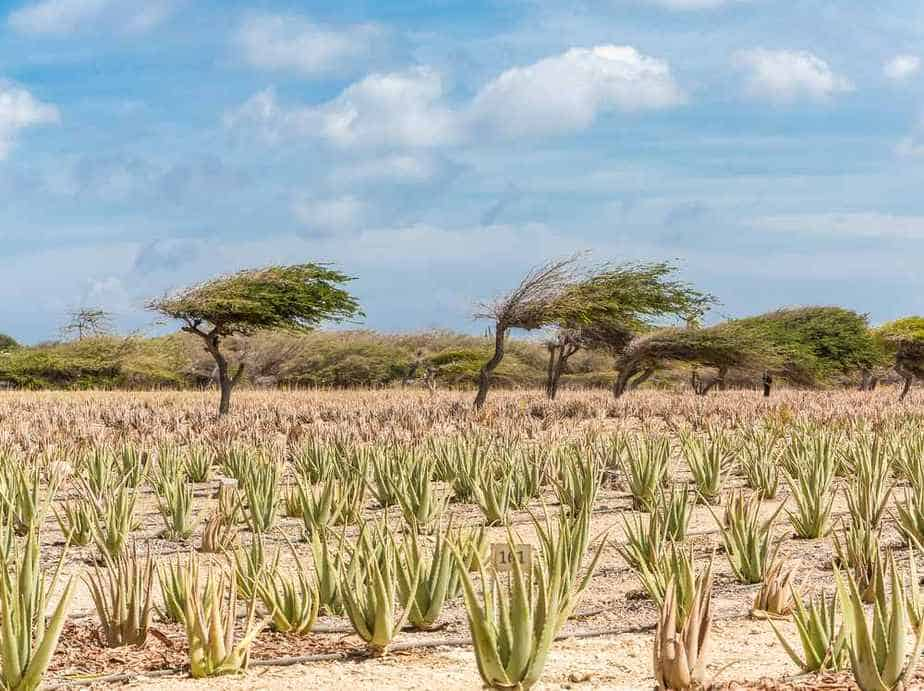 Aloe Vera Fabrik Aruba Sehenswürdigkeiten: Die 22 besten Attraktionen