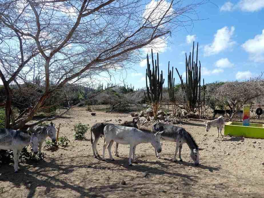 Eselreservatum Aruba Sehenswürdigkeiten: Die 22 besten Attraktionen