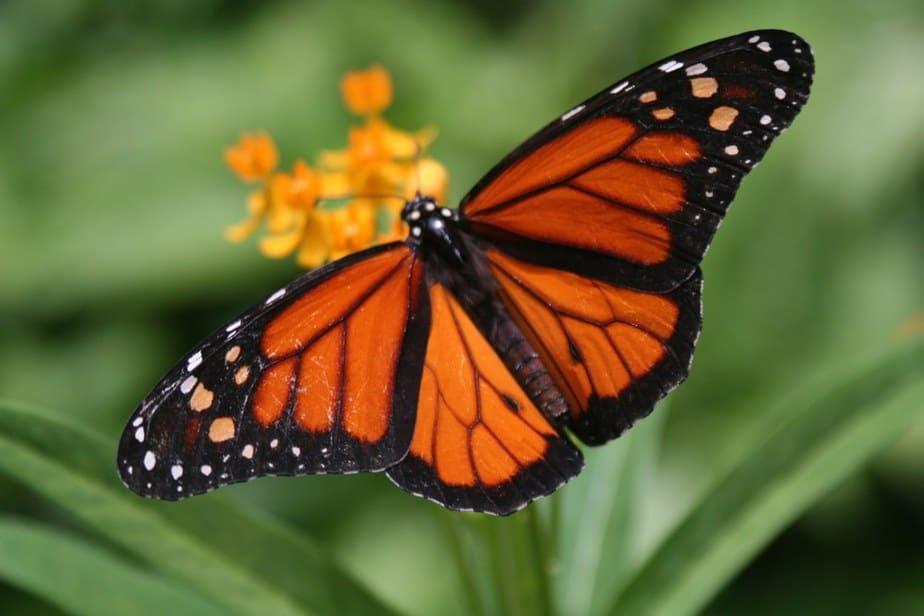 Schmetterlingsfarm Aruba Sehenswürdigkeiten: Die 22 besten Attraktionen