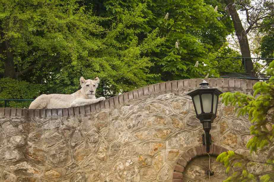 Belgrade Zoo Belgrad Sehenswürdigkeiten: Die 25 besten Attraktionen