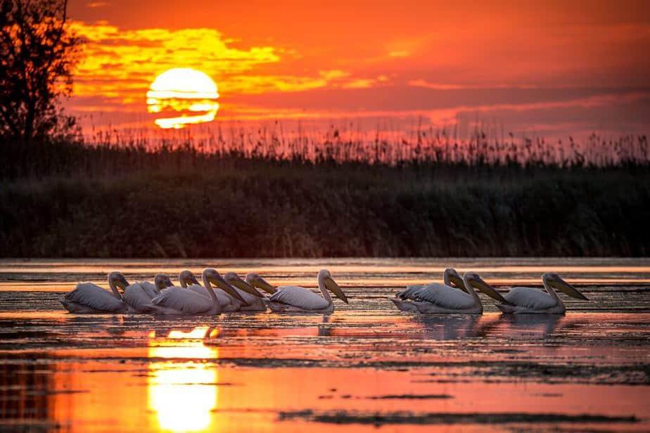 Donaudelta Rumänien Sehenswürdigkeiten: Die 22 besten Attraktionen – 2020