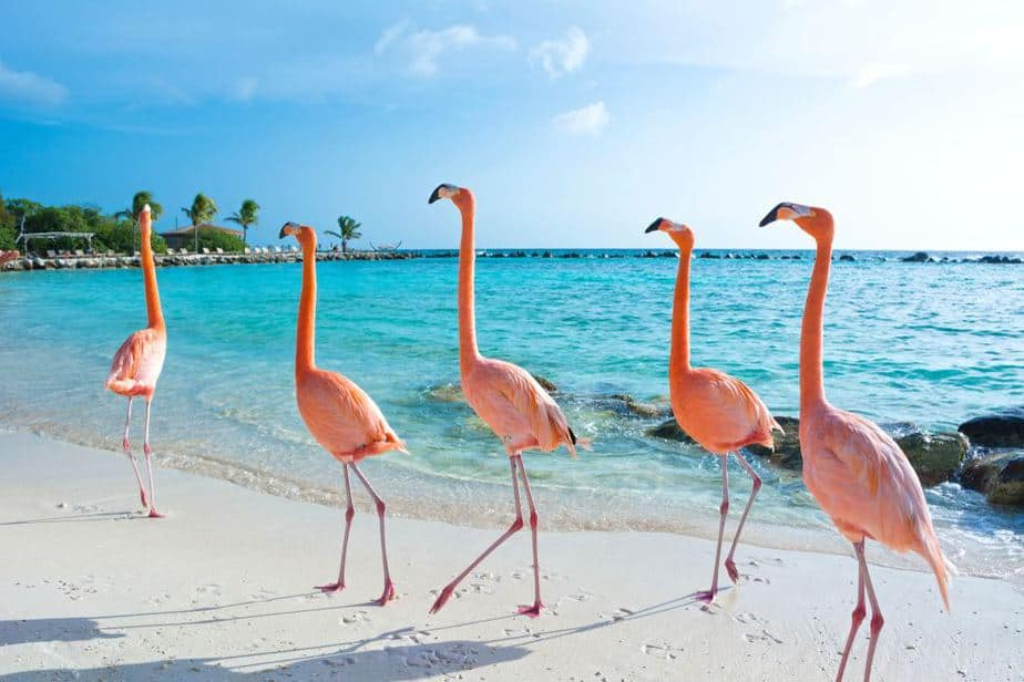 Flamingo Beach Caribbean Dreams: Das sind Arubas schönste Strände
