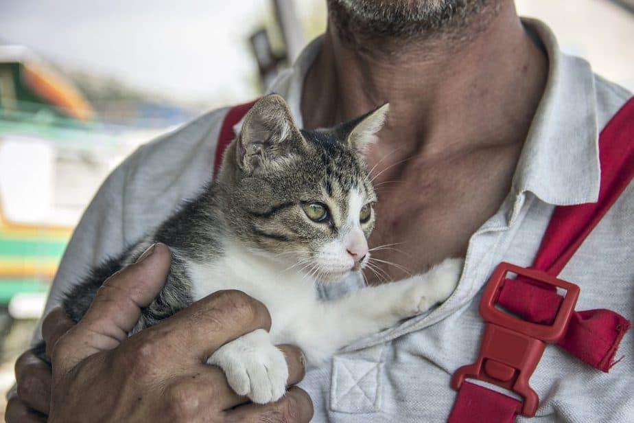Montenegro Tierhilfe Podgorica Sehenswürdigkeiten: Die 22 besten Attraktionen
