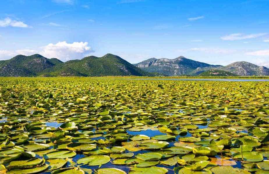 Nationalpark Skutarisee Montenegro Sehenswürdigkeiten: Die 20 besten Attraktionen