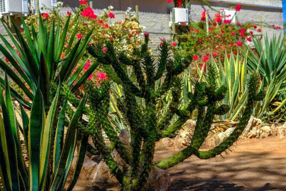 Botanischer Garten Namibias Windhoek Sehenswürdigkeiten: Die 20 besten Attraktionen