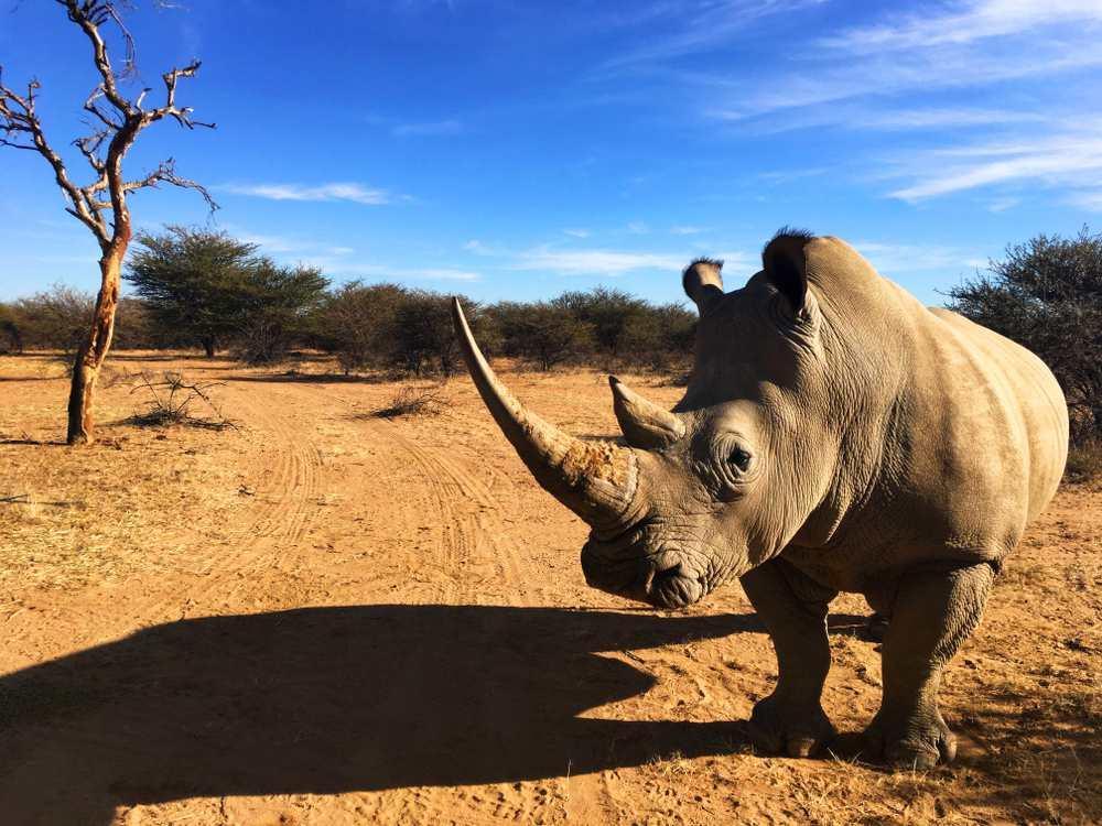 Okapuka-Ranch Windhoek Sehenswürdigkeiten: Die 20 besten Attraktionen
