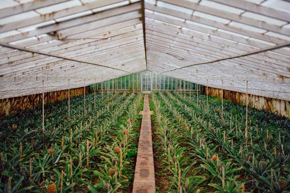 Ananasplantage Azoren Sehenswürdigkeiten - Die 22 besten Attraktionen