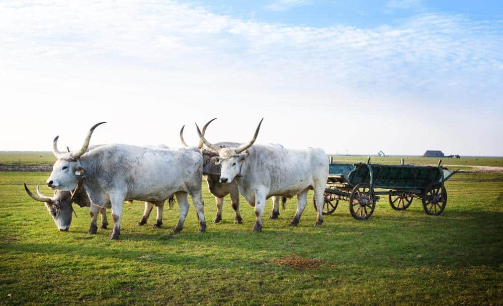 Nationalpark Hortobágy Die schönsten Nationalparks Ungarns
