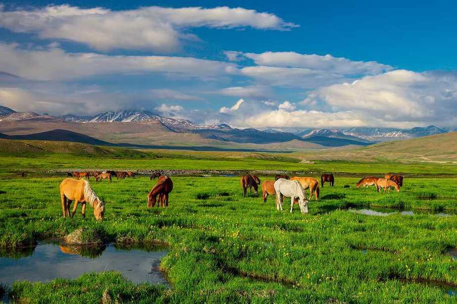 Deosai Nationalpark Pakistan Sehenswürdigkeiten - Die 20 besten Attraktionen