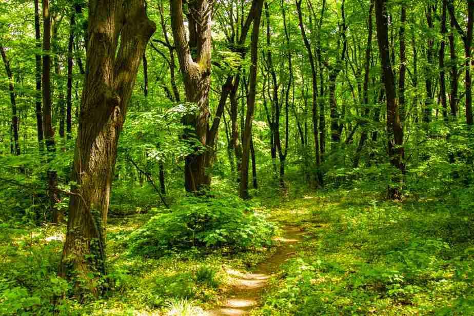 Park šuma Košutnjak Die schönsten Parks und Grünflächen in Belgrad, Serbien