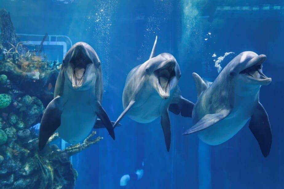 Das nationale Aquarium von Neuseeland Neuseeland Sehenswürdigkeiten: Die 20 besten Attraktionen