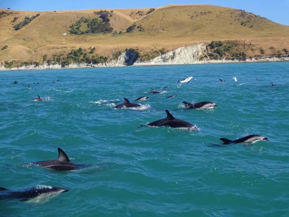 Kaikoura Neuseeland Sehenswürdigkeiten: Die 20 besten Attraktionen