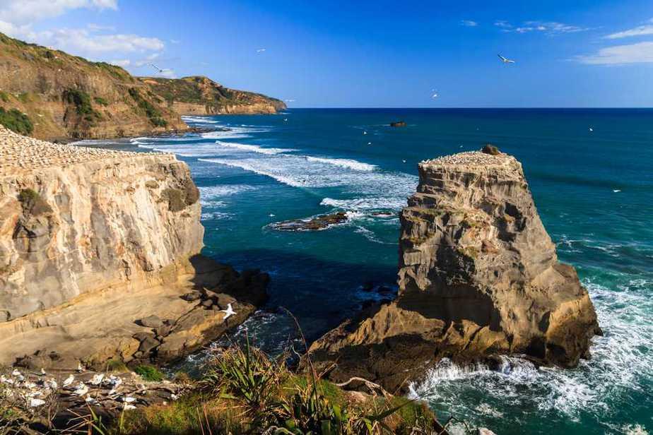 Muriwai Beach Neuseeland Sehenswürdigkeiten: Die 20 besten Attraktionen