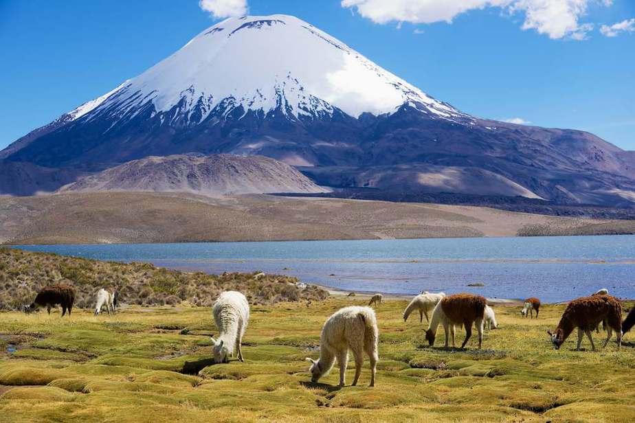 Nationalpark Lauca Chile Sehenswürdigkeiten: Die 20 besten Attraktionen