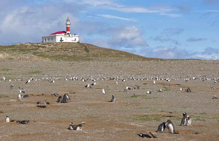 Naturdenkmal Los Pingüinos Chile Sehenswürdigkeiten: Die 20 besten Attraktionen
