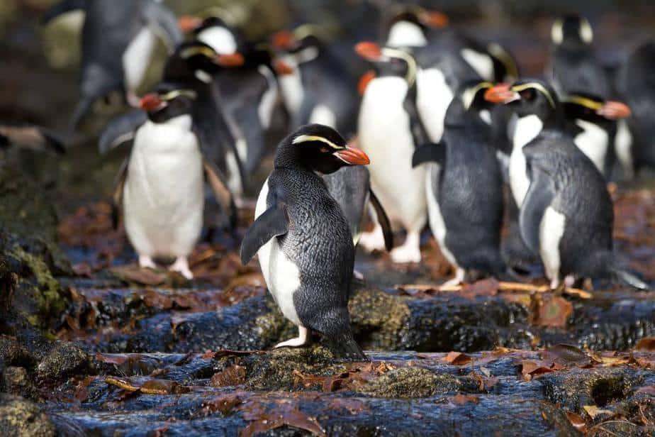 Subantarktische Inseln Neuseeland Sehenswürdigkeiten: Die 20 besten Attraktionen